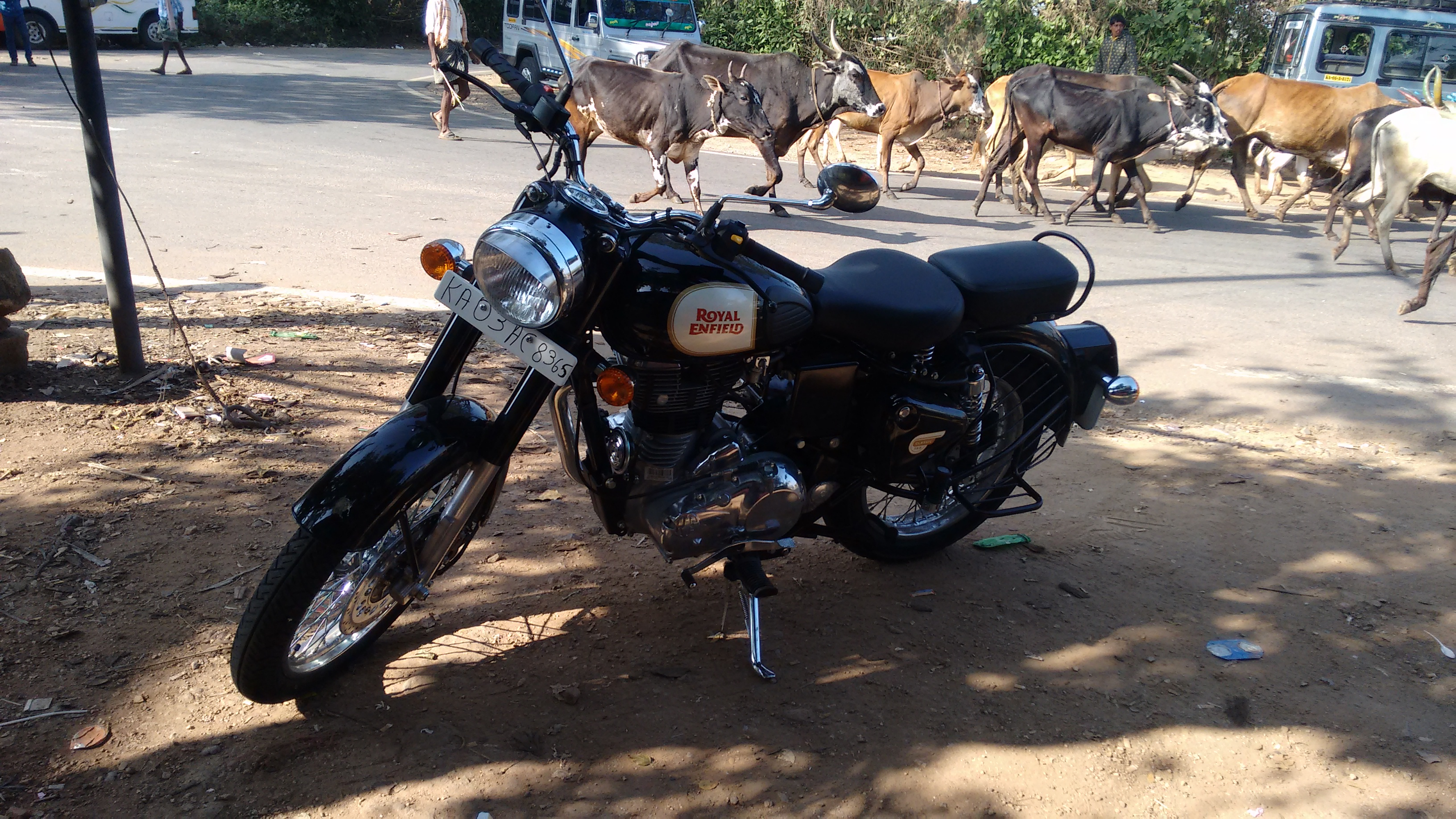 Royal Enfield 350 parked facing the left; in the background a herd of skinny cattle pass towards the right